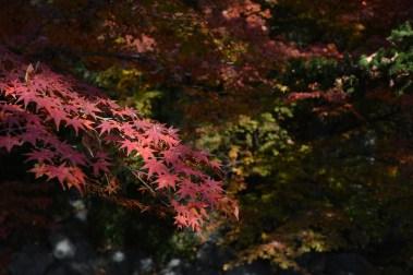 鶴見緑地の紅葉2014その18