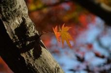 鶴見緑地の紅葉2014その29