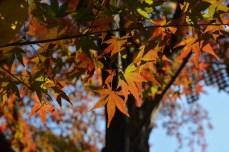 鶴見緑地の紅葉2014その30