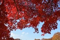 鶴見緑地の紅葉2014その34