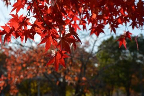 鶴見緑地の紅葉2014その1