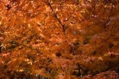 鶴見緑地の紅葉2014その5