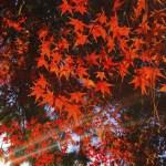 2014年11月22日 今朝ランと深北緑地の紅葉と横浜国際女子マラソン雑感