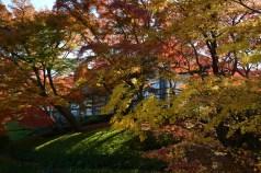 D7100で撮った奈良公園の紅葉 その1