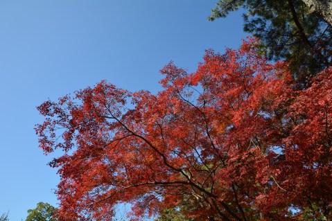 D7100で撮った奈良公園の紅葉 その2