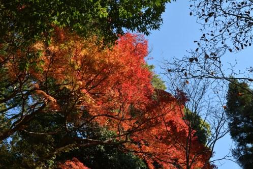 D7100で撮った奈良公園の紅葉 その4