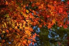 D7100で撮った奈良公園の紅葉 その6
