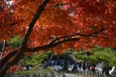 D7100で撮った奈良公園の紅葉 その7