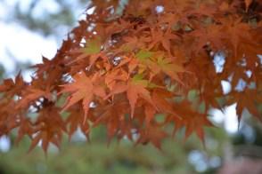 D7100で撮った奈良公園の紅葉 その9