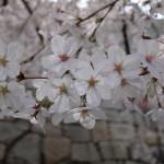 """""""MONACO FUNK""""と""""哀愁のホッケンハイム"""" – エレキギター レッスン9, 10"""
