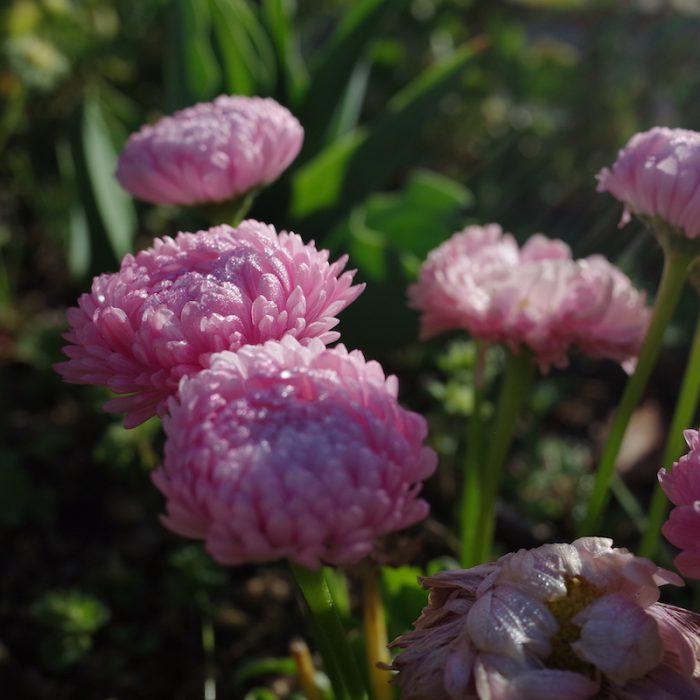 深北緑地の花