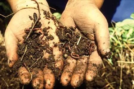Fun Soil Facts for Kids