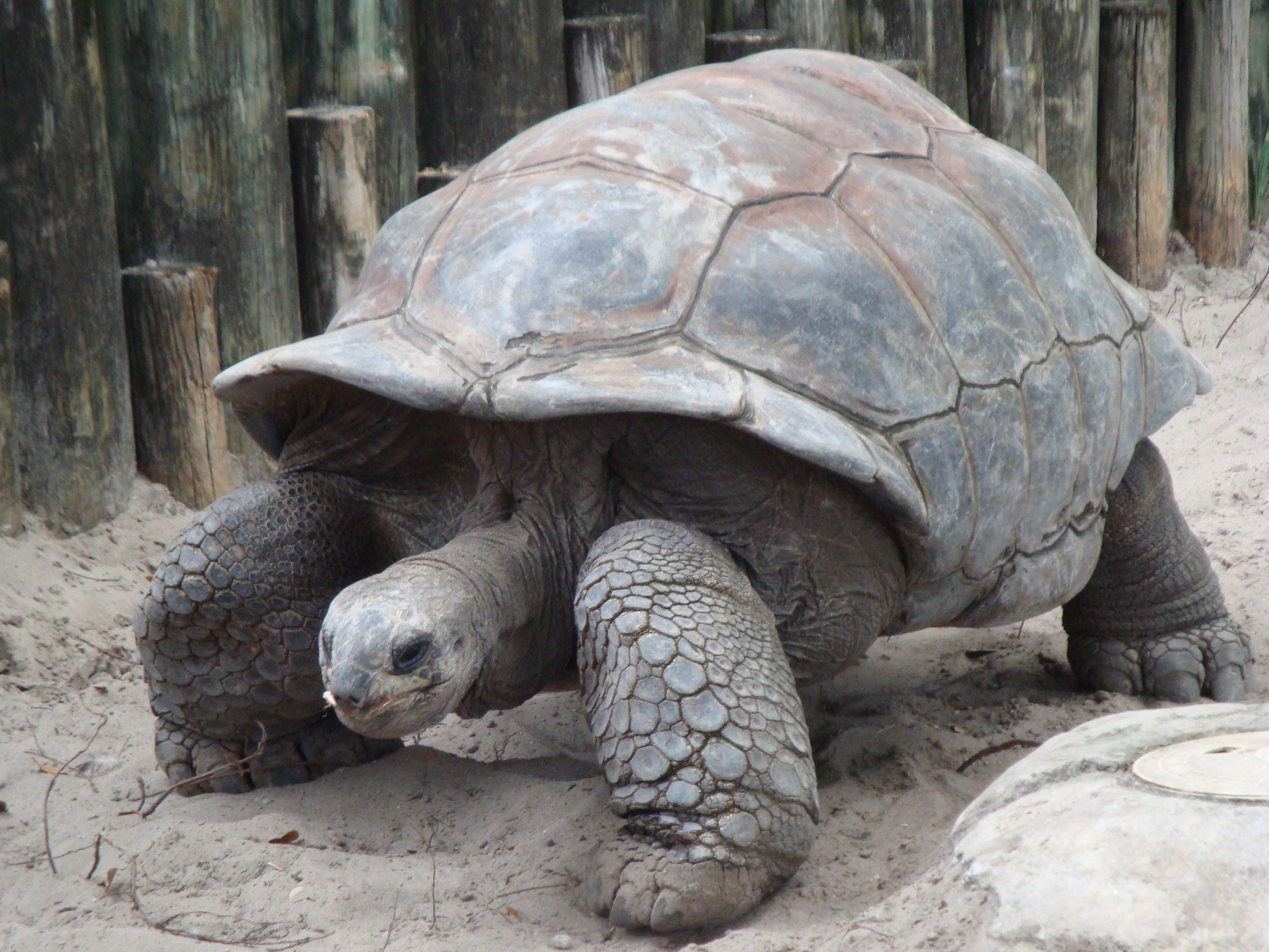 How The Tortoise Got Its Shell Worksheet