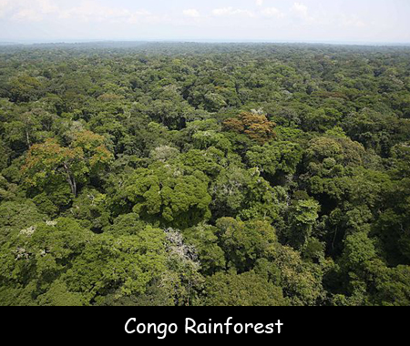 """The congo rainforest is the second largest tropical rainforest in the world, covering an area of 2 million square kilometers — which is why it is often called the """"world's second lungs"""" Facts For Kids About The Congo Rainforest"""