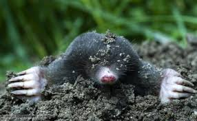 Useful information about moles