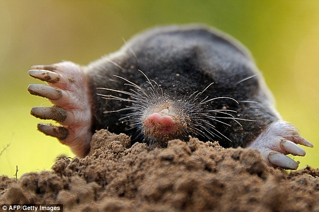 Daily Mail mole article