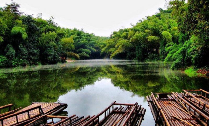 Sichuan tours to Shunan Bamboo Forest