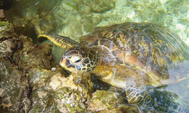 escursione al baraka aquarium img