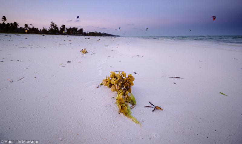 spiaggia kitesurf zanzibar foto