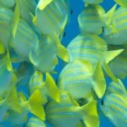 Snorkeling-zanzibar-foto