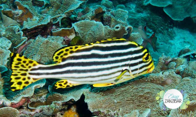 Snorkeling zanzibar img
