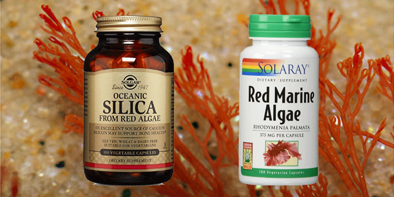 red-algae-supplements