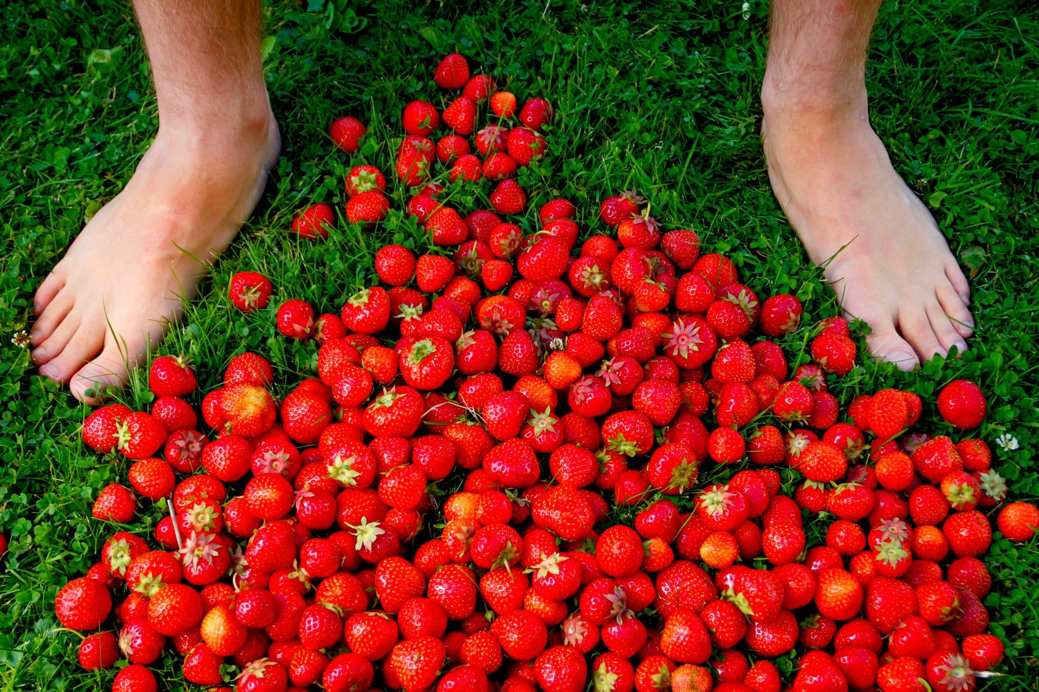 たくさんのイチゴ
