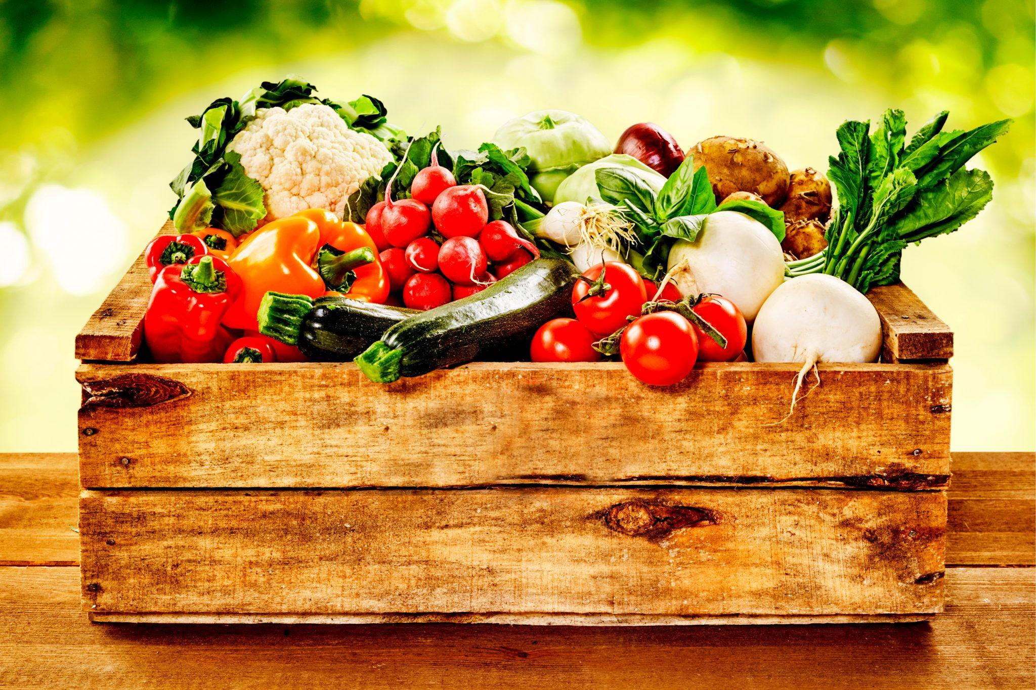 色んな種類の野菜