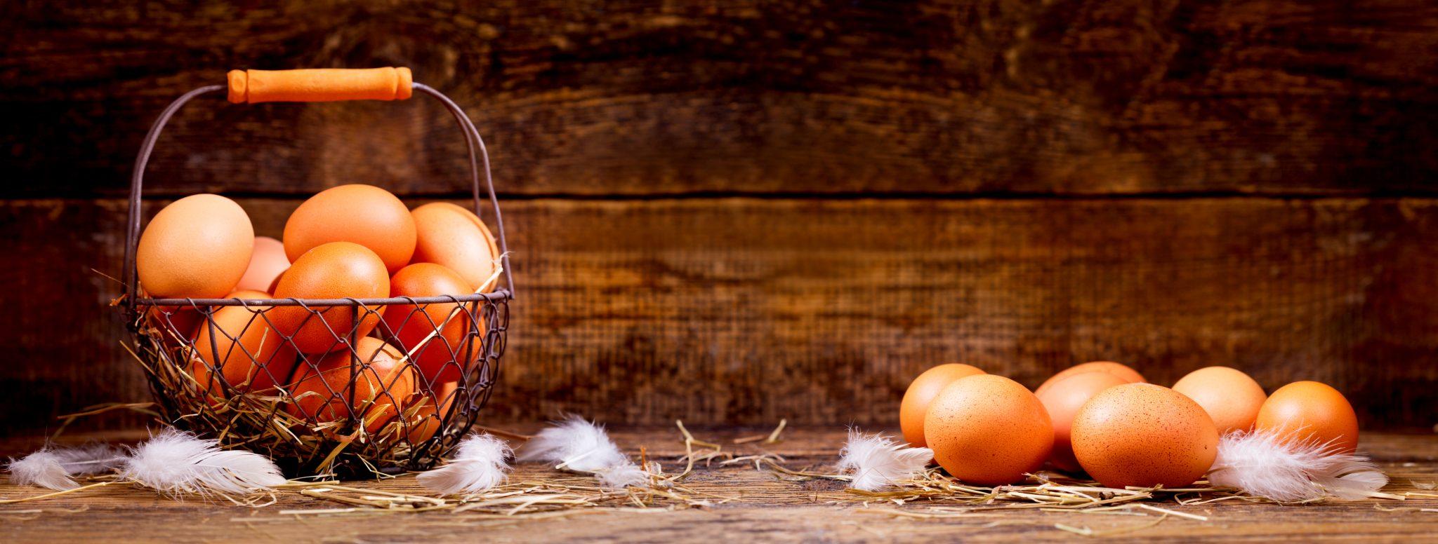 生みたての新鮮な卵