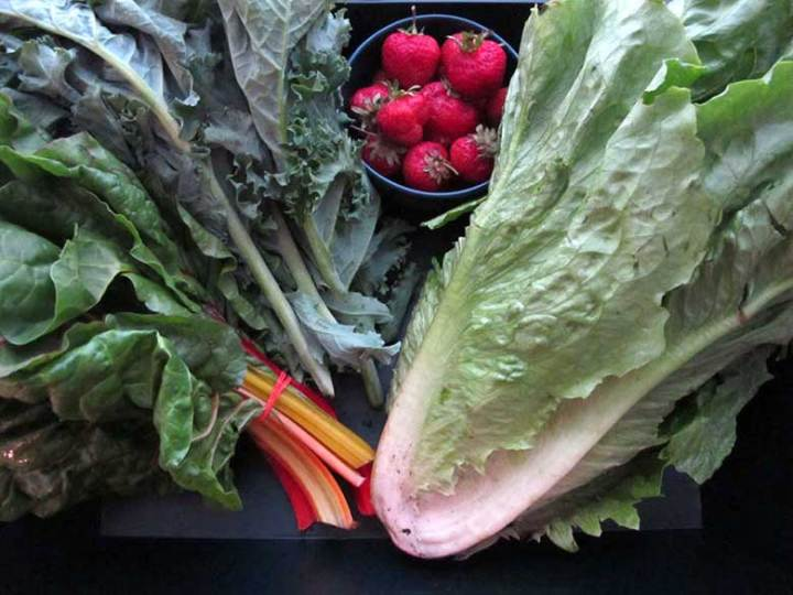 Farmshare Chronicles   eatatkates.com - My adventures in using farmshare vegetables without losing my mind. This week: attack of the green monster.
