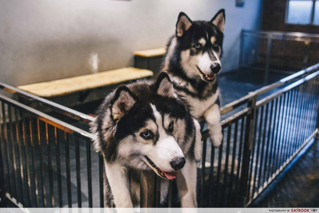 Corgi and The Gang Pet Cafe - ambience 1