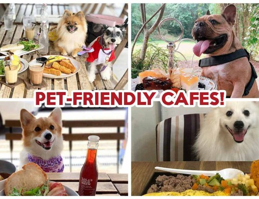 Pet-Friendly Cafe - Featured image