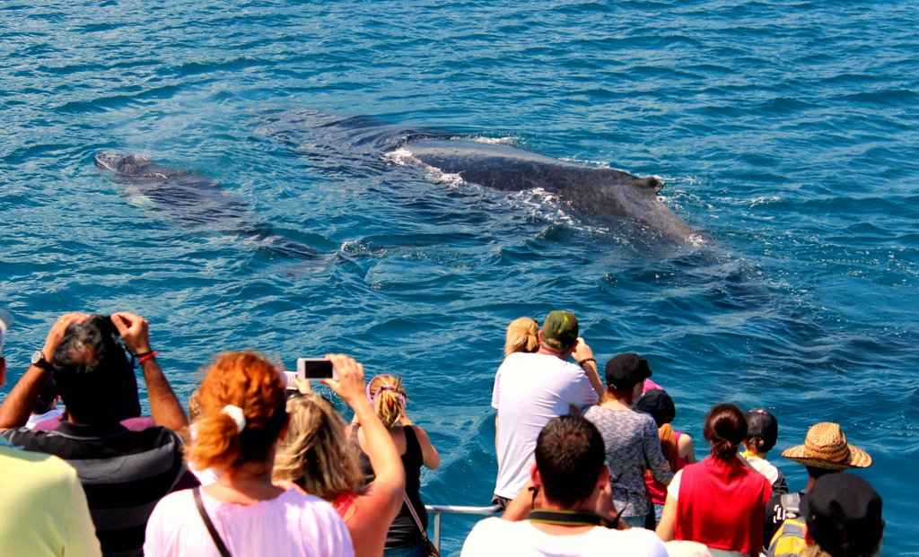 Hunting a whale on the Fraser Coast