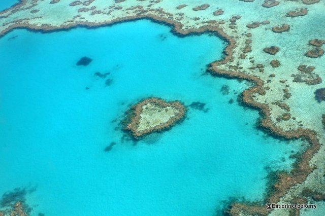 Finding true love on the Great Barrier Reef