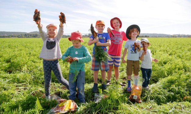 Say no to a carrot-astrophe! Help farmers and pick your own