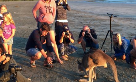 Sharing a beach sunrise with kangaroos