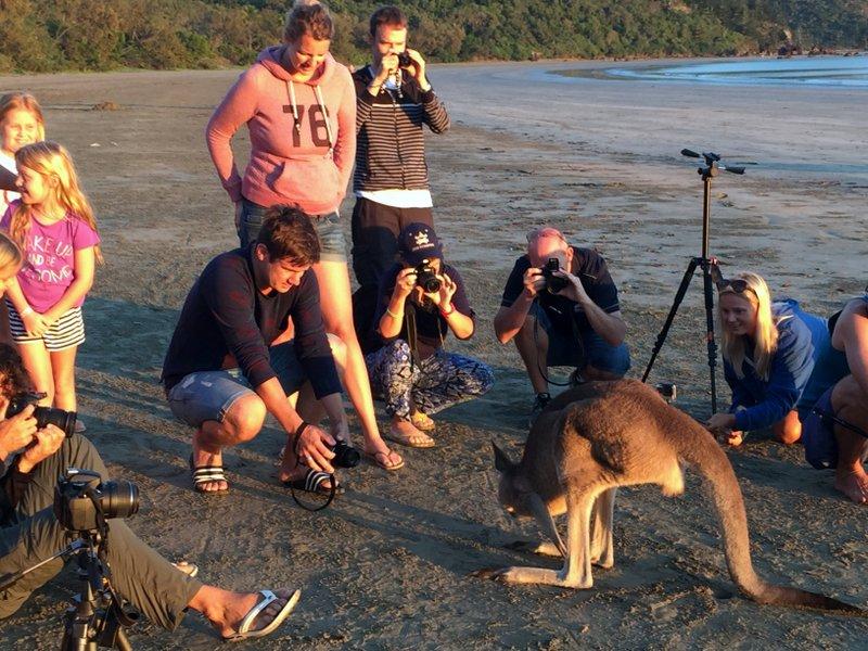 Sharing a beach sunrise with kangaroos