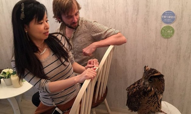 Find an owl cafe and other crazy cafes in Japan