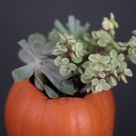 Easy fall decor: succulents in pumpkins