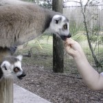 Week in Review: Disney World & Safari Wilderness