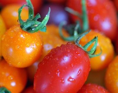 26589029_xxl-cherry-tomatoes-800x600