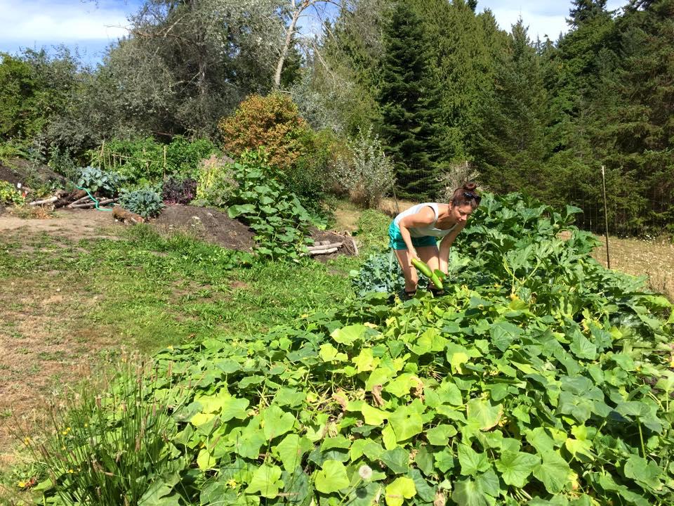 garden_cukes