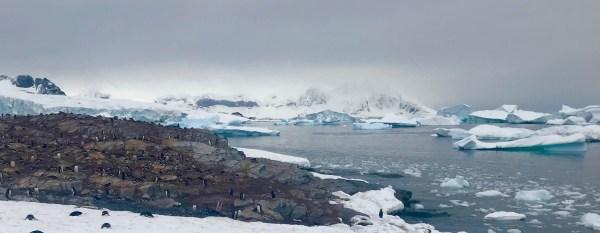 Antarctica: gents