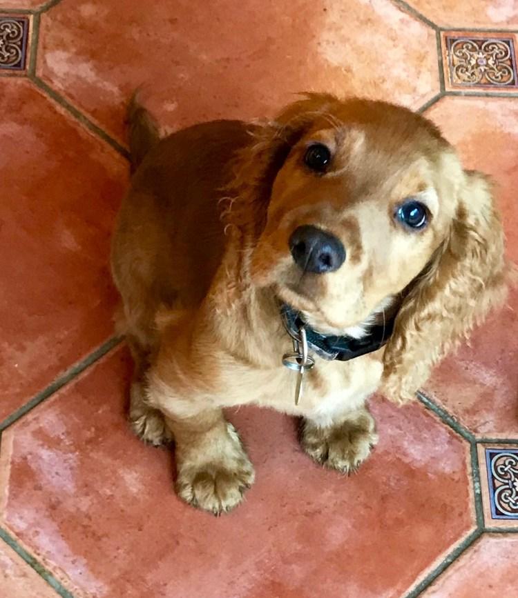 DogBuddy: Hector