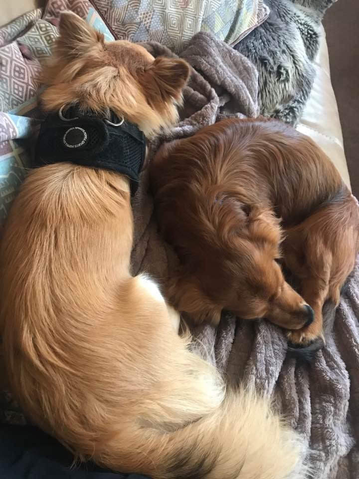 Dog Buddy: Hank and Chico