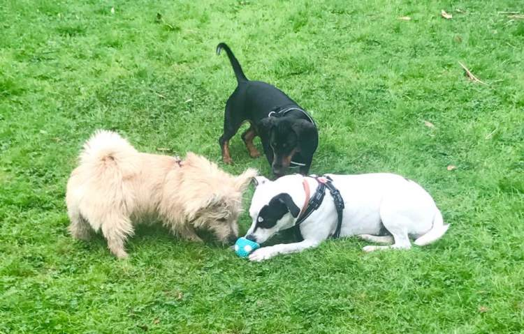 Dog Buddy: Murphy, Chappie, Dora