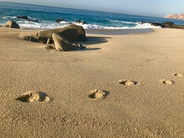 Grand Velas: Beach