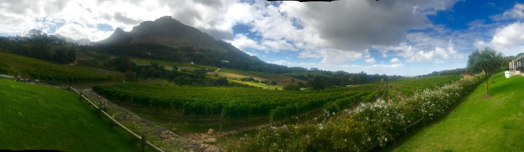 Constantia Glen: views