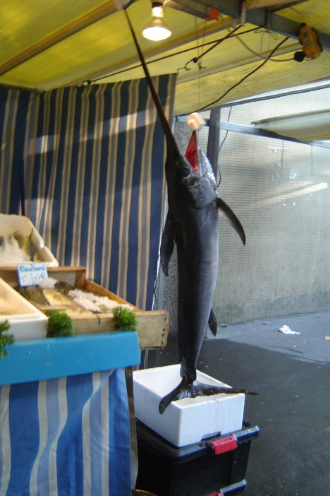 Majestic Swordfish