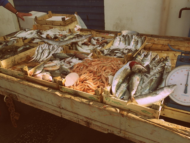 Fresh fish at the Trapani fish market